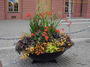 Цветы в вазонах клумбы