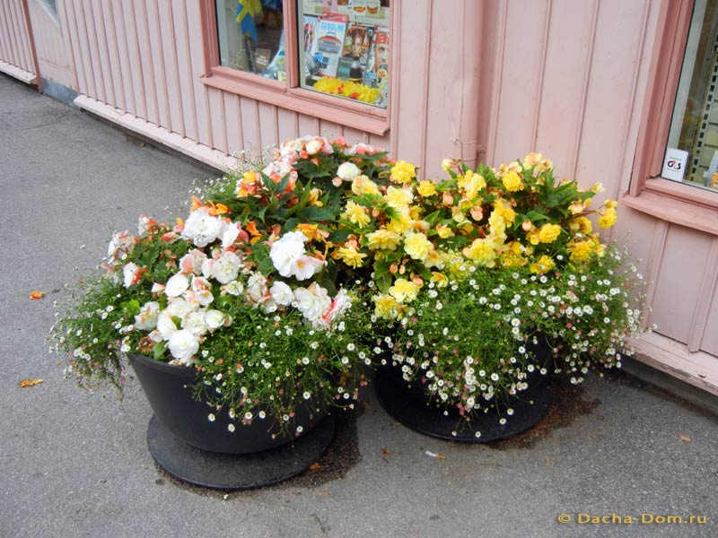 Прикольные клумбы для цветов