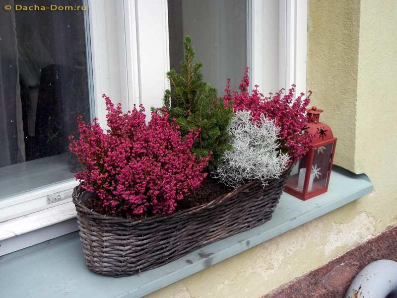 Вереск на клумбе с цветами